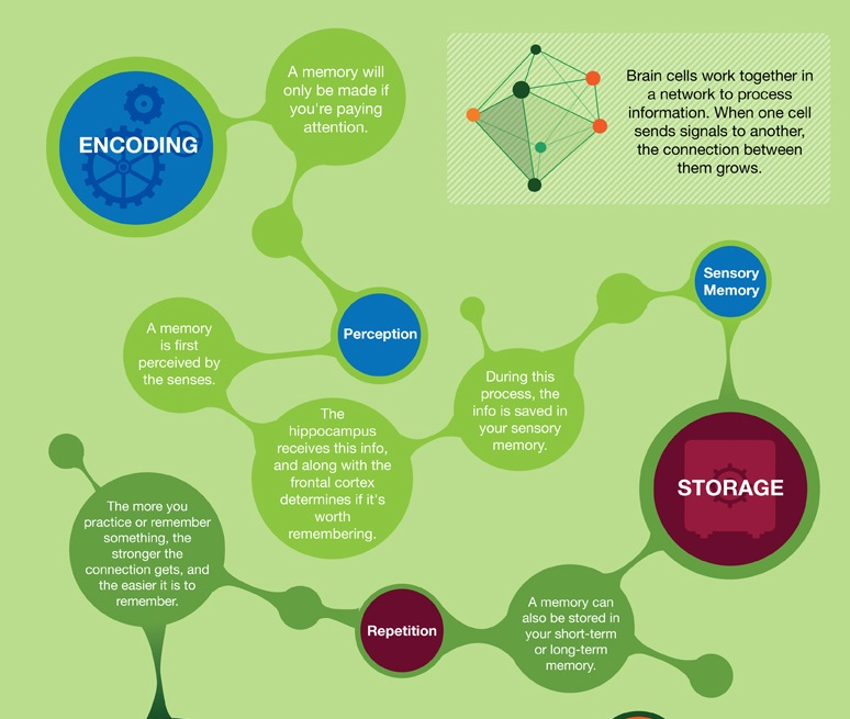 How memory works forgetting and improvement inforgraphic