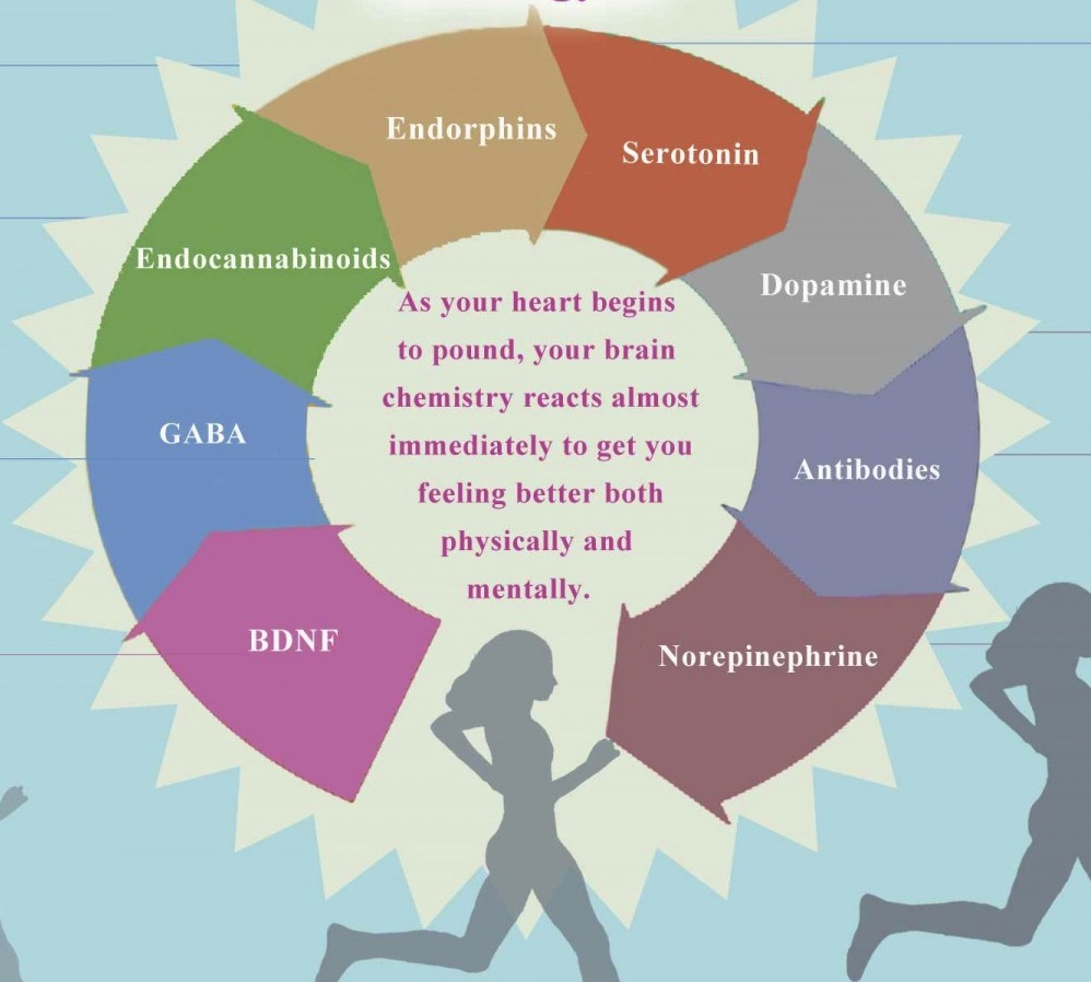brain exercise happiness mood neurotransmitter hormone [infographic]