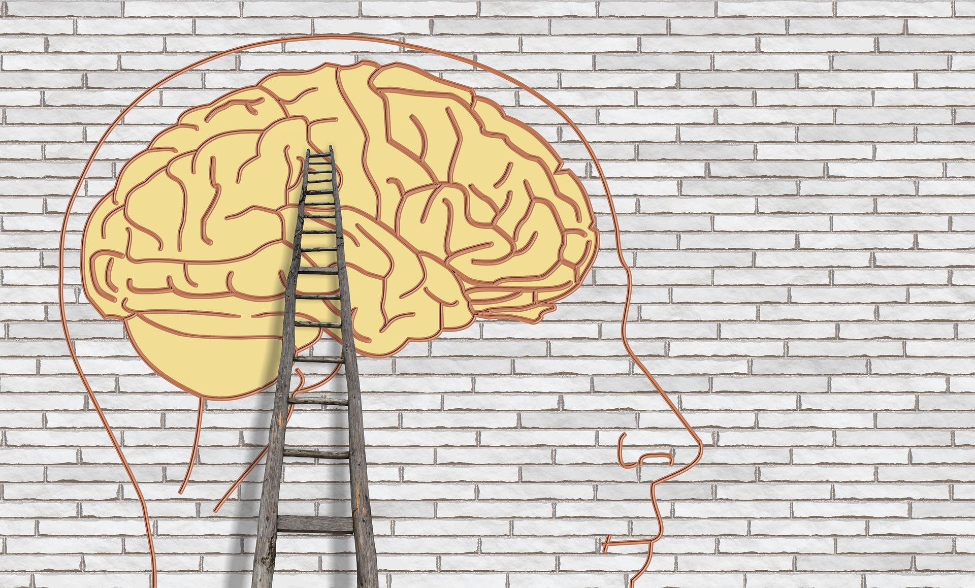 brain-3535300_1920